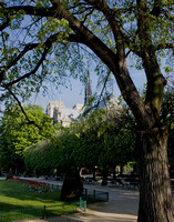Notre Dame and Tree