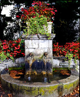 Fountain and geraniums